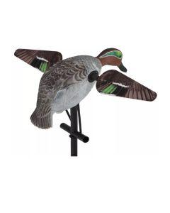 Lucky Duck Greenwing Teal krikand